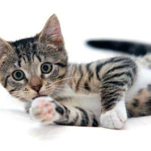 Women's Cat Apparel